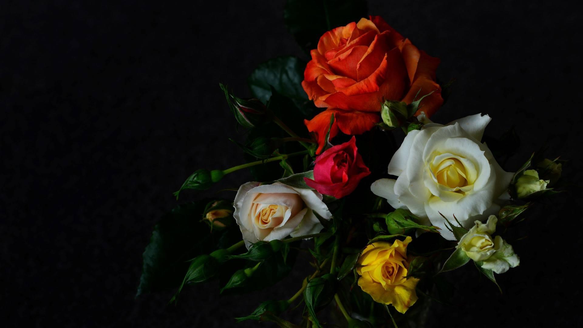 Красивые картинки розы на черном фоне, шоколадница шаблон день
