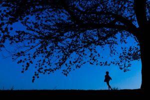 Фото бесплатно ночь, силуэты, дерево