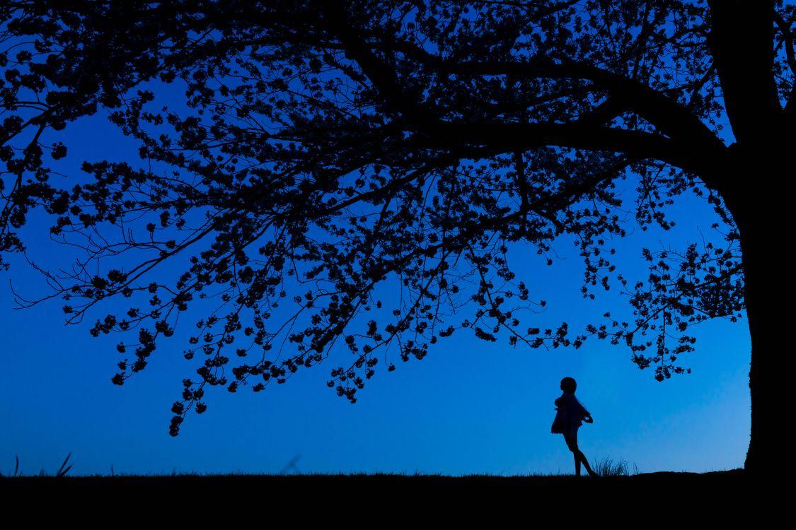 Фото бесплатно ночь, силуэты, дерево, девушка, рендеринг