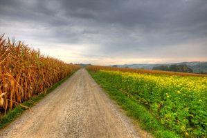 Бесплатные фото поле,дорога,цветы,пейзаж