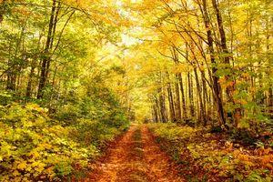 Фото бесплатно лес, деревья, дорога, осень, природа