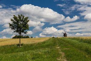 Бесплатные фото поле,деревья,мельница,пейзаж