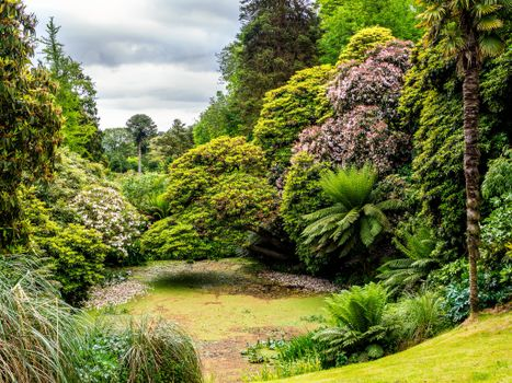 Фото бесплатно Lost Gardens of Heligan, Cornwall, UK