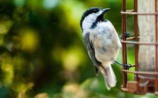 Бесплатные фото птичка,клюв,крылья,хвост,перья,лапки,сетка