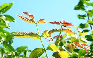 Бесплатные фото растение,ветви,стебли,листья,цветные,небо
