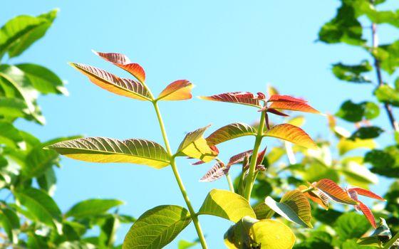 Фото бесплатно растение, ветви, стебли