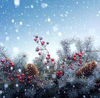 Фото бесплатно Рождество, дерево, снег