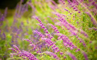 Фото бесплатно трава, цветы, розовые