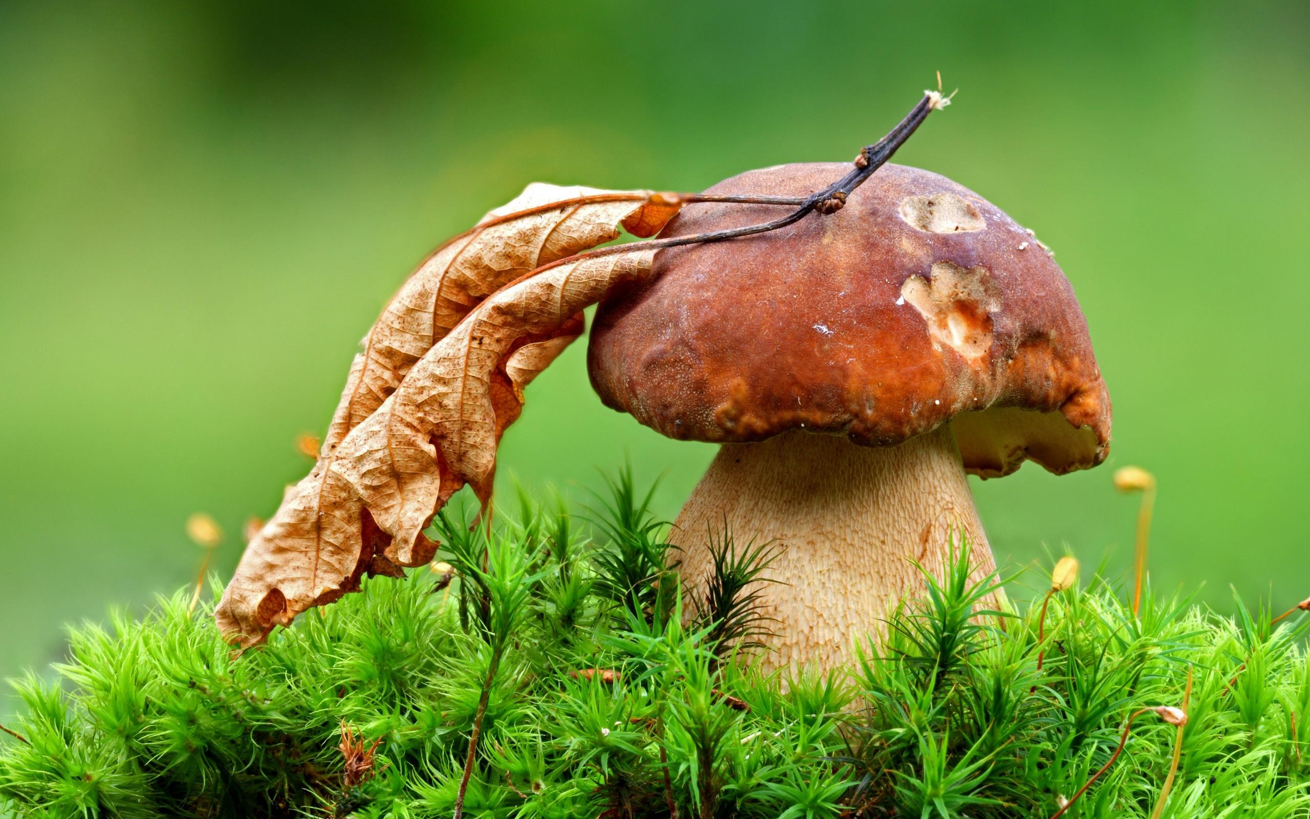 беленькие грибочки скачать