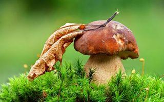 Бесплатные фото трава,зеленая,гриб,шляпка,листья,сухие