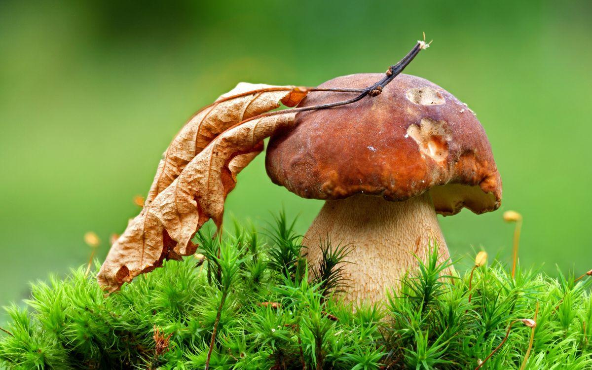 Фото бесплатно гриб, колпак, сухой - на рабочий стол