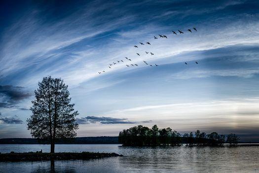 Фото бесплатно деревья, озера, стая птиц