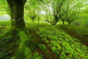 Бесплатные фото лес,деревья,мох,природа