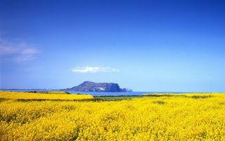 Заставки побережье,трава,цветы,море,гора,небо,облака