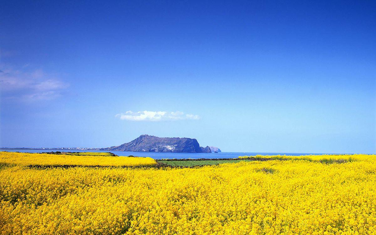 Free photo coast, grass, flowers - to desktop