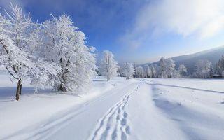 Бесплатные фото зима,мороз,дорога,снег,следы,деревья,иней