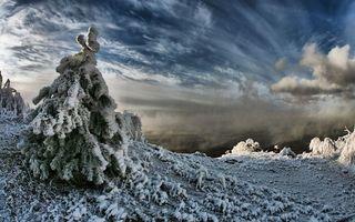 Бесплатные фото гора,вершина,мороз,ель,трава,снег,иней