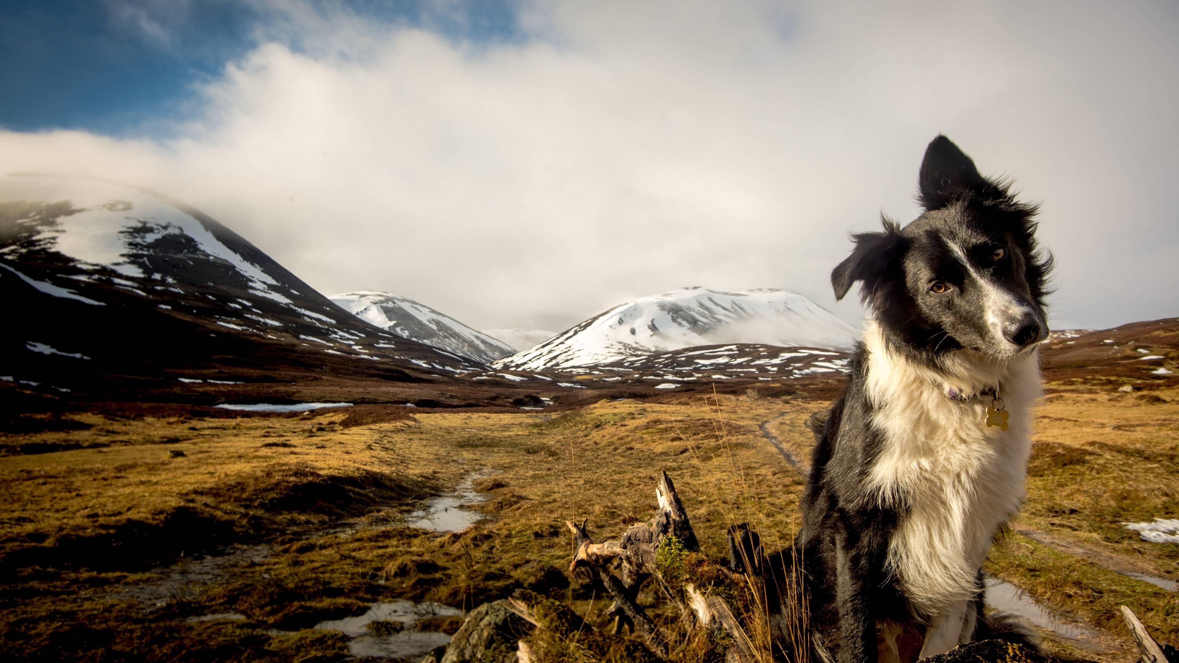 Обои пес среди гор