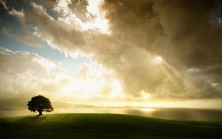 Бесплатные фото поле,трава,дерево,крона,небо,облака,солнце