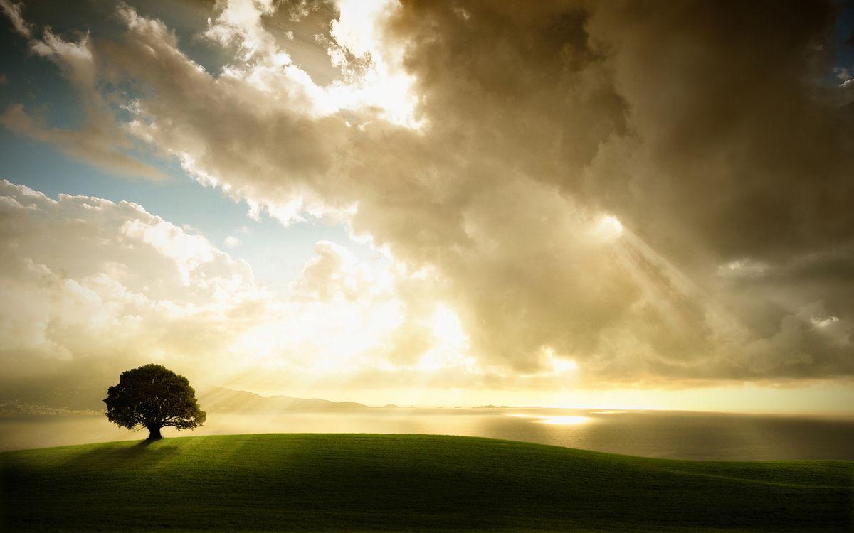 Фото бесплатно дерево, лучи, трава - на рабочий стол