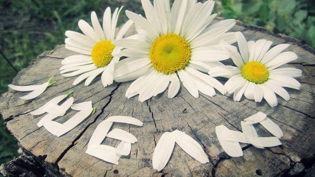 Бесплатные фото ромашки,лепестки,слово,люблю,пень,цветы