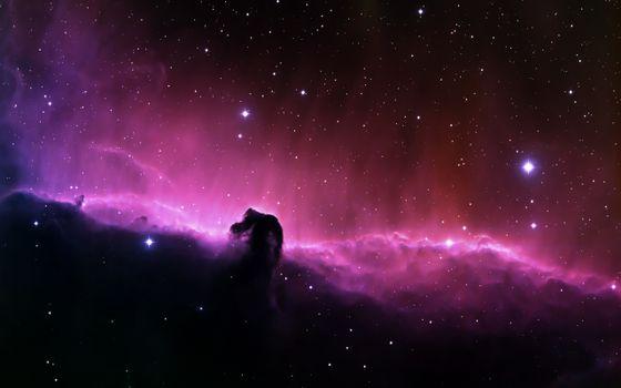 Фото бесплатно туманность, конская голова, звезды