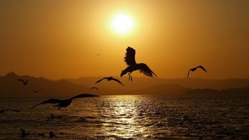 Бесплатные фото чайки,полет,лапы,крылья,море,горы,солнце