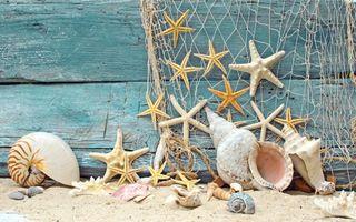 Бесплатные фото доски,пляж,песок,сеть,морские звездочки