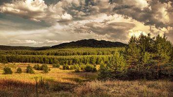 Бесплатные фото поле, деревья, закат, пейзаж