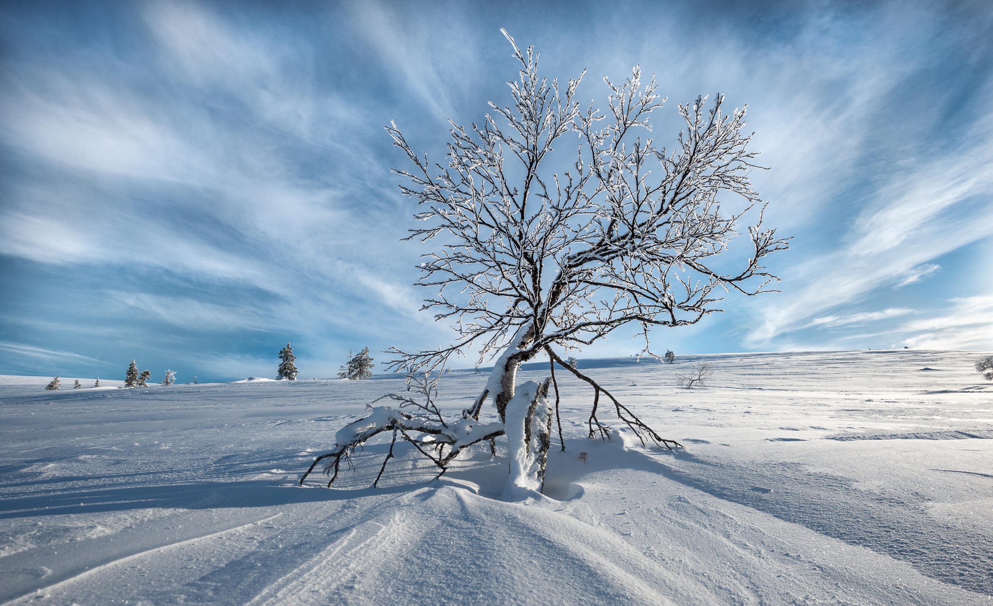 обои зима, поле, сугробы, снег картинки фото
