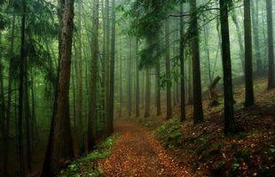 Бесплатные фото лес, деревья, дорога, туман, природа