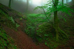 Бесплатные фото лес,деревья,косогор,туман,природа