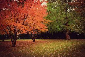 Бесплатные фото осень,лес,парк,деревья,пейзаж