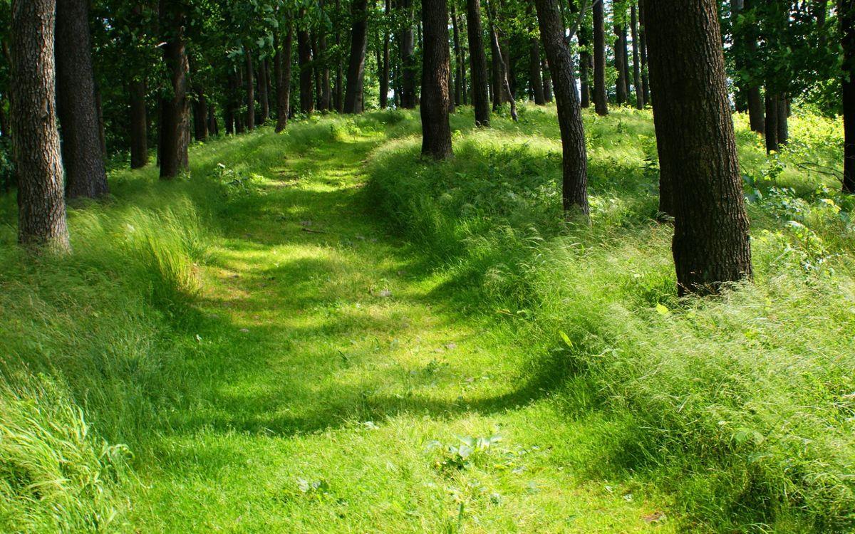 Фото бесплатно дорога, полевая, трава, зеленая, деревья, лес, пейзажи