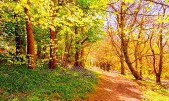 Фото бесплатно лес, деревья, дорога, природа