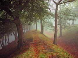 Бесплатные фото осень,парк,лес,холмы,деревья,тропинка,туман