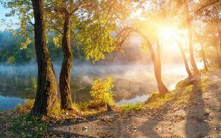 Бесплатные фото озеро,туман,деревья,закат,олнце,лес
