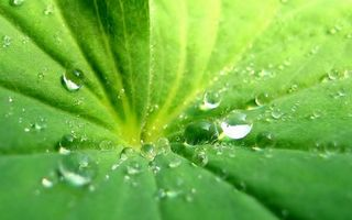 Бесплатные фото лист,зеленый,прожилки,капли,вода,роса