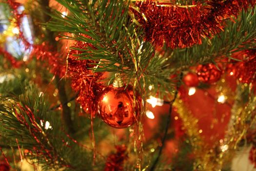 Photo free christmas tree, Christmas tree, new year