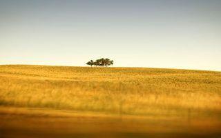 Заставки Трава, деревья, поле, небо, солнце