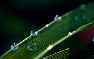 Фото бесплатно капли, воды, трава