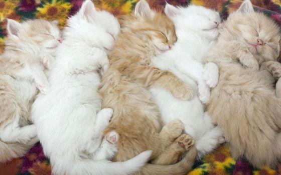 Фото бесплатно котята, пушистые, спят