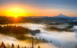 Бесплатные фото лес,деревья,туман,горизонт,горы,небо,солнце