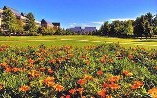 Бесплатные фото клумба,цветы,газон,деревья,здания,небо