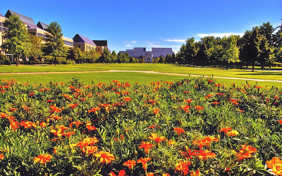 Фото бесплатно клумба, цветы, газон - на рабочий стол