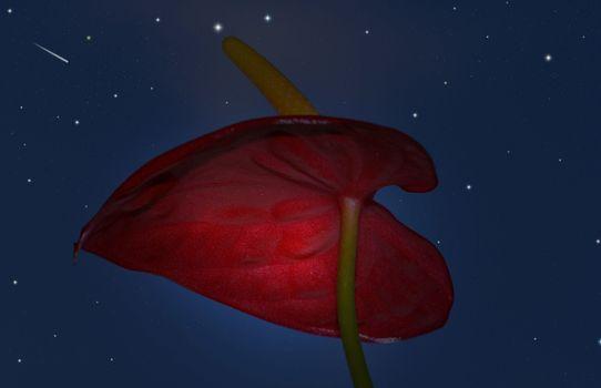 Фото бесплатно ночь, звёзды, цветок