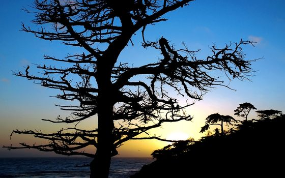 Photo free evening, coast, tree