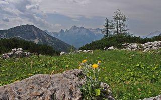 Заставки горы, камни, трава, деревья, небо, облака