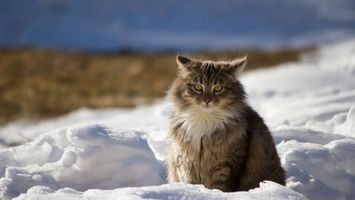 Заставки кот, сугроб, снег