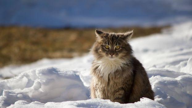 Фото бесплатно кот, сугроб, снег